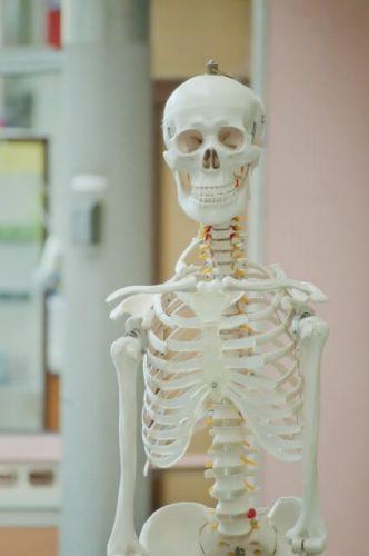 理科室にある不気味な骨格標本