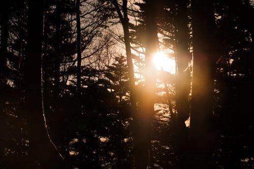森でみる夜明け